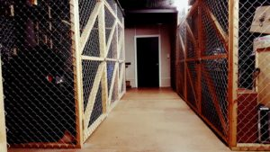Storage Cages corridor